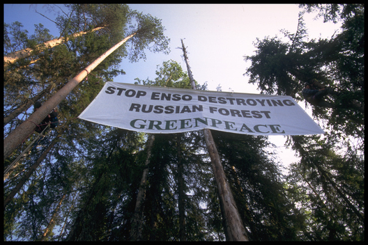 Forest Action against Enso in Russia