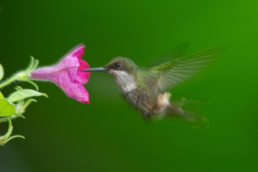 Hummingbird in Brazil