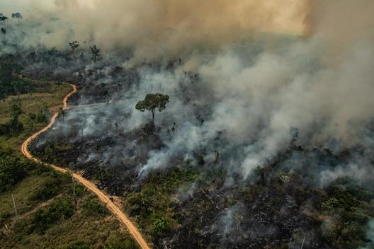 Forest Fires in Altamira, Pará, Amazon (2019)