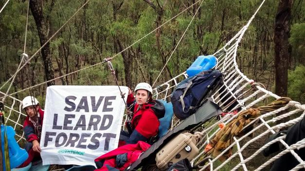 Leard State Forest Clearing Action in Australia