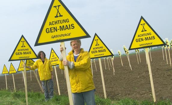 Action against Genetically Engineered Maize