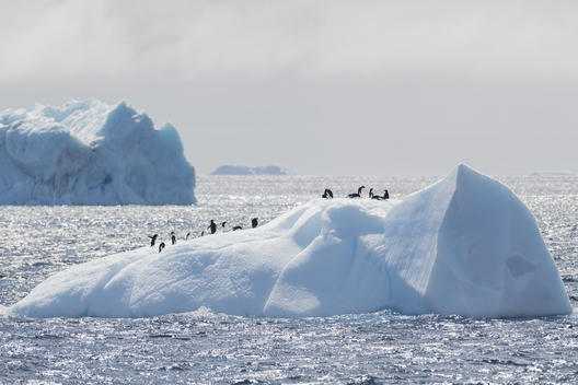 Adélie Penguins in the Antarctic