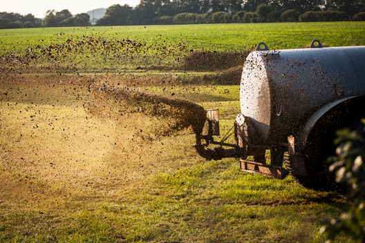 Farmer Sprays a Paddock with Cow Manure near the Schlei