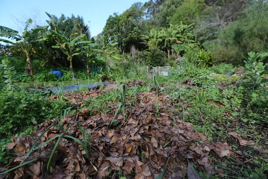 Ecological Farming in Northland, New Zealand