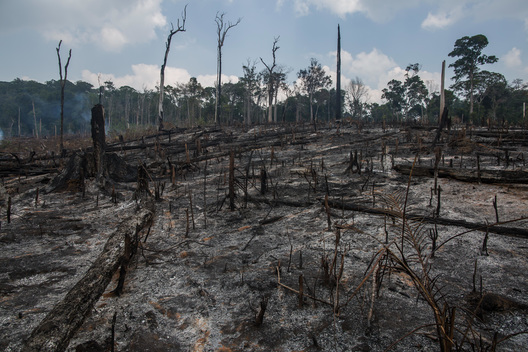 Burned Forest in the Amazon