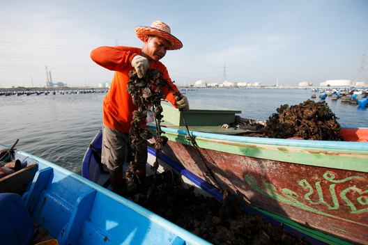 Mussel Farmer in Rayong Province in Thailand