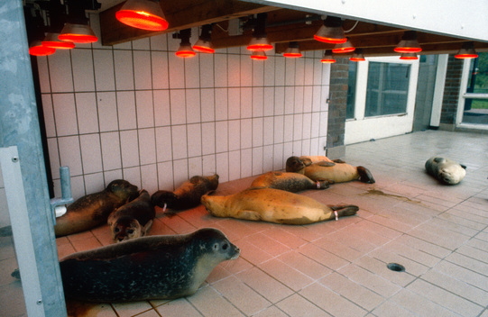 Seals at the rehabilitation centre