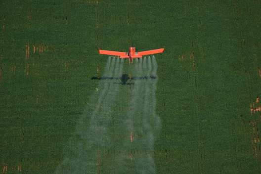 Insecticide Spraying in Brazil