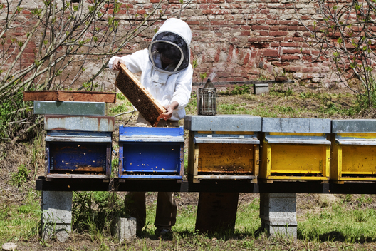 Greenpeace Visits Beekeepers in North Italy