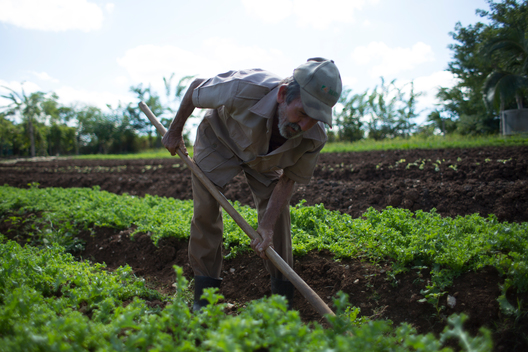 Workers on Finca Marta Farm in Cuba