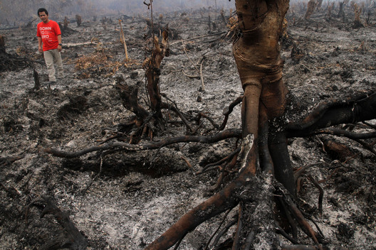 Forest Fire in Riau