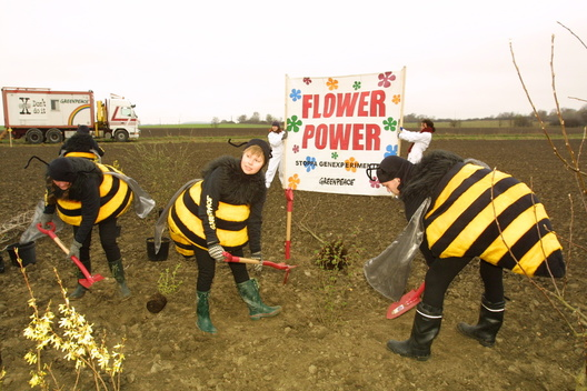 GE Action in Sweden Against Oil Seed Rape
