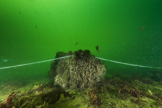Diving Action at Fehmarn Belt in Germany
