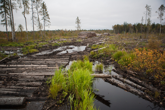Deforestation in Intact Forest Landscapes in Russia Arkhagelsk Region