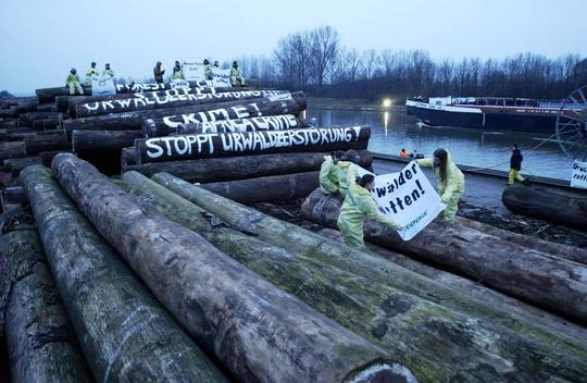 Forests Action at Fritz Offermann in Germany