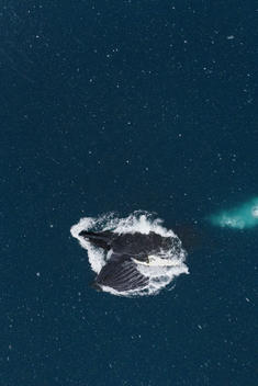 Humpback Whales Feeding on Krill in the Antarctic