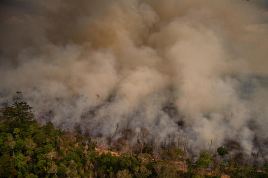 Fire Moratorium - Deforestation and Fire Monitoring in the Amazon in August, 2020