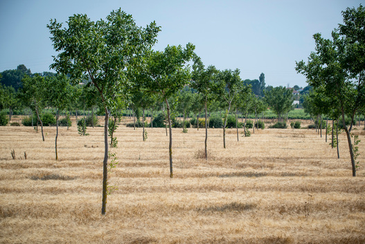 Agroforestry Plot in France