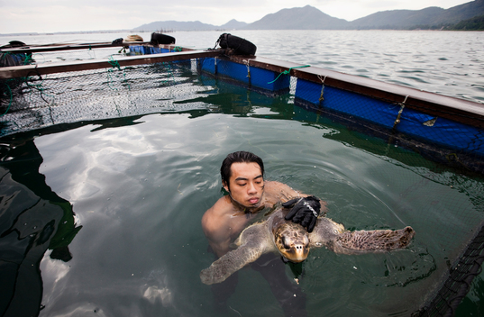 Rescued Olive Ridley Turtle in China