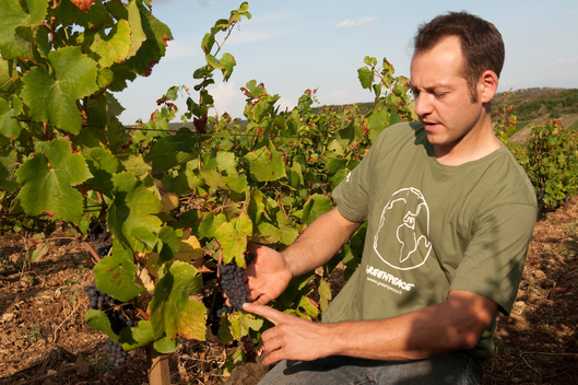 Wine Maker in His Vineyard in France