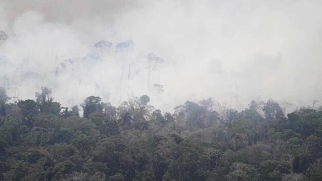 Deforestation and Fire Monitoring in the Amazon in August, 2020 - Clipreel 17/08