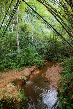 Small River in the Forest in Cameroon