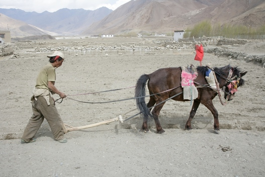 Worker With Horse in Pu Mai Village