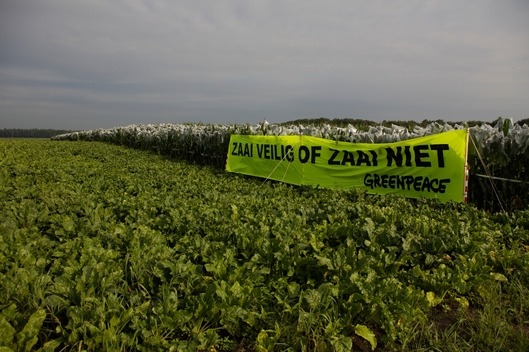 Genetic Engineering Action Maize Field in Arnhem
