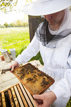 Beekeeper with Honeycomb in Germany