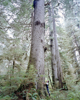 Tongass Forest Documentation