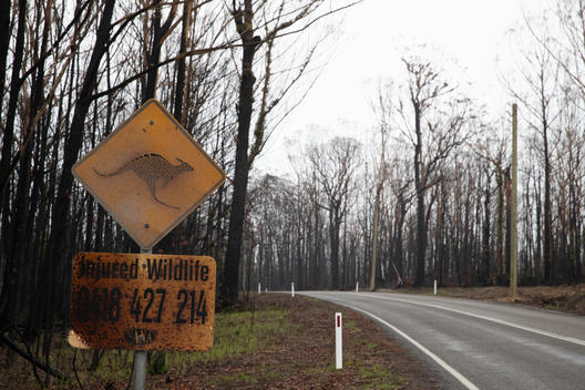 Bushfire Aftermath Near Ulladulla, NSW