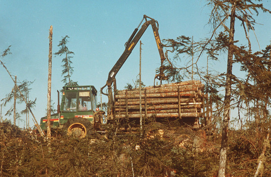 Illegal Logging in Siberia