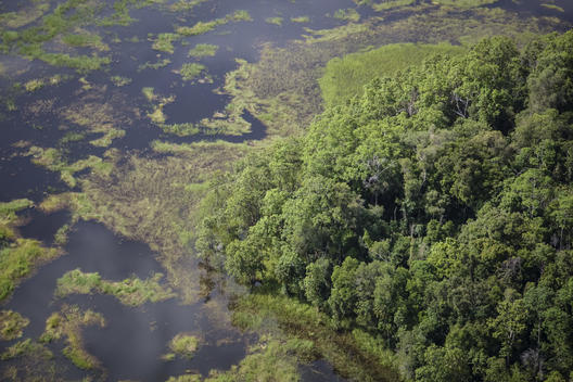 Wetland in Southern Papua