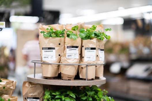 Herbs in Paper Packaging