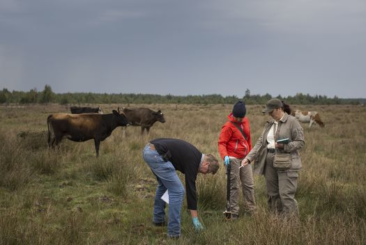 Sampling Grass on the Marshes in the Rivne Region in Ukraine