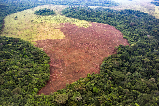 Peatland Forest in DRC