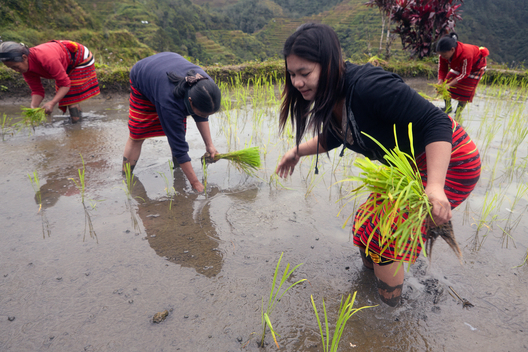 Golden Rice Photo-Story in the Philippines