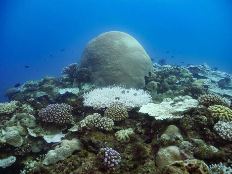 Coral Bleaching Investigation in South Taiwan