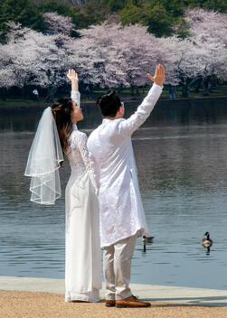 Bridal Couple Visits Cherry Blossoms in Washington DC