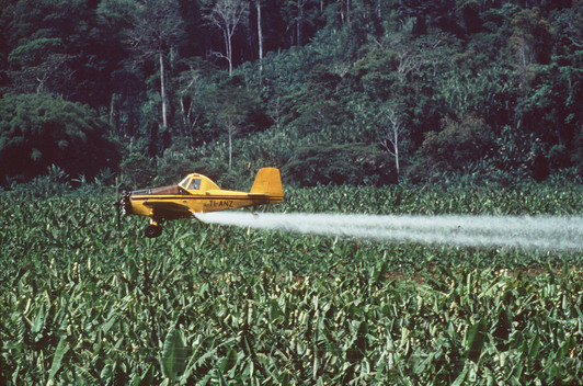 Pesticides on Chiquita Banana Plantation in Costa Rica