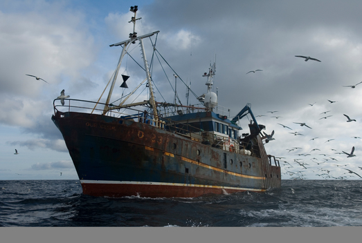 Seagulls Feed on By-catch From Trawler