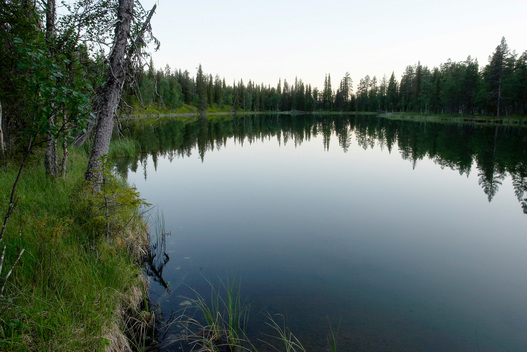 Lake in Old Growth Forest