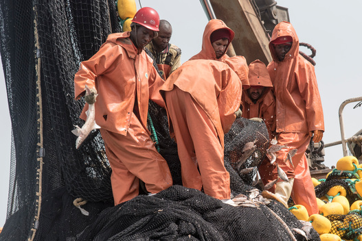 Young Shark among Bycatch on Chinese Vessel in Mauritania
