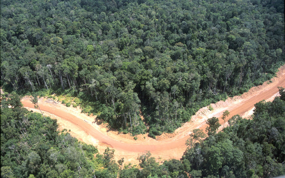 "Kiunga Aiambak ""road"" ( cover up for illegal logging concession). Papua New Guinea."