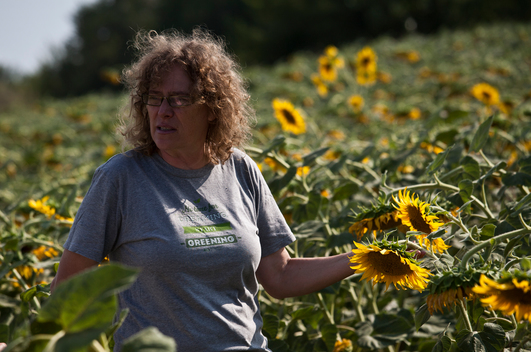 Sunflowers on Ecological Farm in Bulgaria
