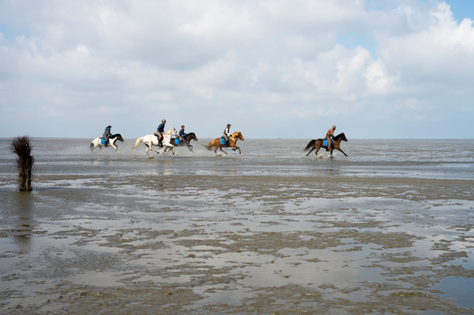 Riders in the Wadden Sea in Germany