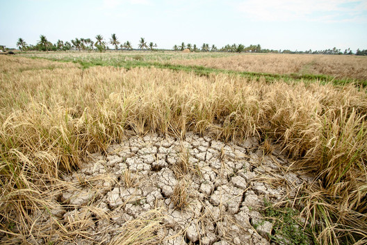 El Niño Drought in the Philippines