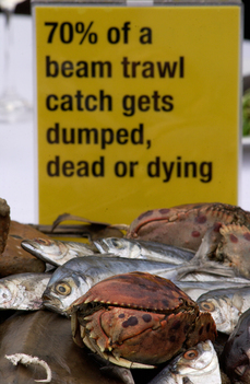 Action against Trawling and Bycatch in London