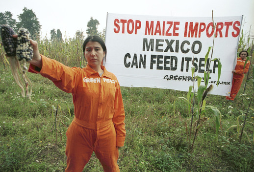 Action Against GE Maize Imported Into Mexico