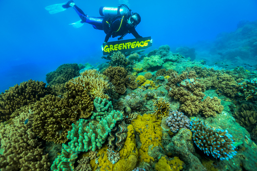 CourageWorks Campaign Dive in the Great Barrier Reef